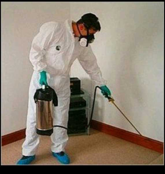 Perfect High Care Pest Control Service